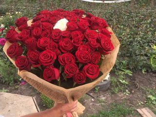 101 trandafiri 450 lei la Super pret .Direct de la crescatori .Pret unic