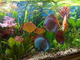 Аквариумные рыбки, обслуживание аквариумов