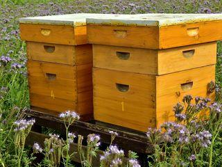 Sprijin pentru apicultori activi!