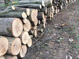 Vind lemn tare de foc ..livrarea la domiciliu gratuita