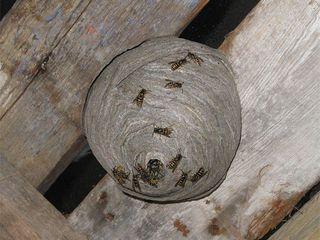 Борьба,уничтожение паразитов на дачных участков : клещи,блохи,муравьи,мухи,кроты,пчелы,осы