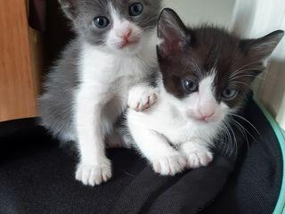 3 pisicute dragalase si jucause cauta stapan.