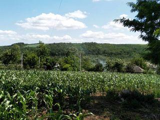 Продается участок 25 соток под постройку дома в центре села Беличений Векь район Сынжерей 10 км от Б