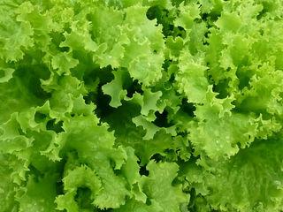 KS 129 салат