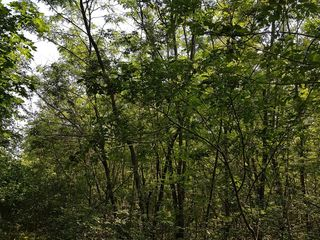 Vand padure 7.5 ha. Продаю лес.