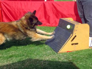 Изготавливаю спортивный инвентарь для собак Флайбол Flyballbox - любимая игра собак. *Дай Лапу*