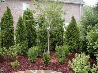 Plante decorative. Schimb posibil