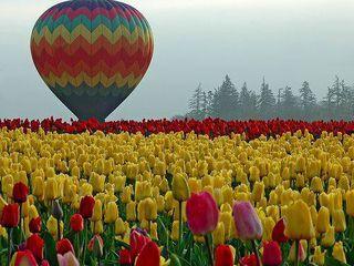 O călătorie turistică cu balonul cu aer cald! Туристический полёт на воздушном шаре!