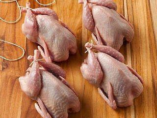 Carne de prepeliță si oua rasa fenix auriu