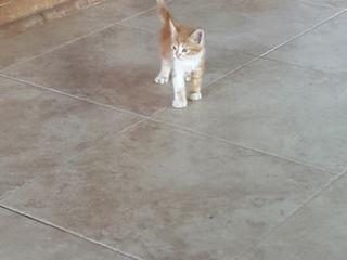 Пропали рыжие котята