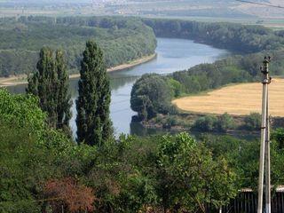 Tenen pe malul riului Nistru, 22 ari - 10500 Euro