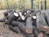 livram lemne carpan frasan stejar salcin sint si dispicate si buturuji