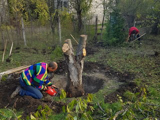 Уборка  участков. резка деревьев  curatarea terenului расчищаем