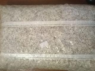 Miceliu de calitate / мицелий вешенки качественный