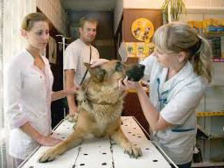 Asistenta Medical Veterinara la domiciliu 24/24 Chisinau si pe tot teritoriul R.M.