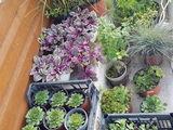 Шикарные растения для вашей клумбы или рокария