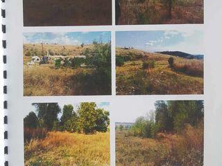 Teren extravilan, amplasat pe adresa r-nul Anenii Noi, sat. Floreni, suprafaţa 0,3 ha