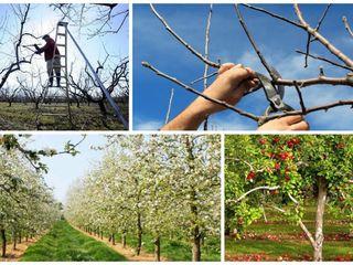 Ingrijirea grădinii, pomilor, viilor și curții