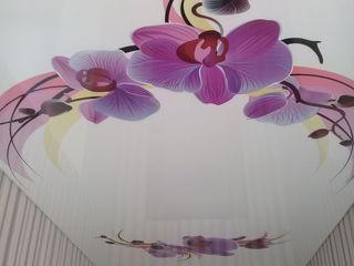 Натяжные потолки, tavane extensibile, funie decorativă...