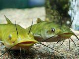 Делимся опытом в аквариумистике.