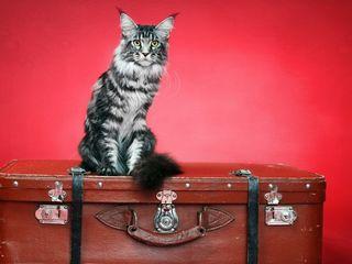 """Ветеринарная клиника """"Кот и Пёс"""" !!! Гостиница для кошек и собак !!!"""