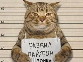 Передержка для собак,  кошек, птичек . недорого . ботаника / возле jumbo