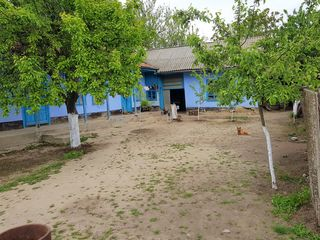 Casa in satul Tiganca situata pe 24 ari/sote: vita de vie + pomi fructiferi