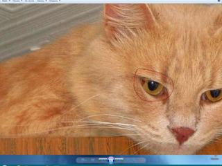 Пропал кот кишинев, буюканы, ул. александр донич, 5а/никулче  05.05.19 рыжий в полоску, полупушистый