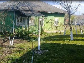 Домик в деревне 30 соток с садом в селе Реча  (орех 40 шт, вишня, черешня, сливы, яблоки) Красотища
