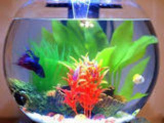 Круглый аквариум 175 ММ