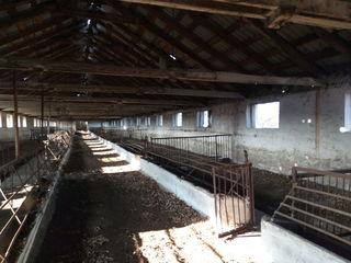 Darea în arendă pe termen lung al spațiului de creșterea vitelor și depozit de ceriale