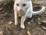 Найден белый кот на буюканах