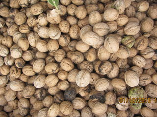 срочно ореховый сад 3200$ торг