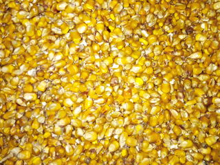 Продам зерно. кукурузы