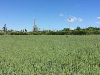 Сельхозземля 15 гектаров в Оргееве