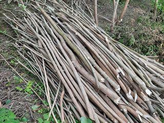 Se vinde lemne