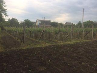 Teren de vânzare în s. Cioburciu, Transnistria