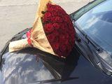 21 trandafiri 675 lei. 51 trandafiri 1600 lei. Livrare !