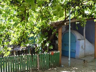 Vind casa in Lapusna