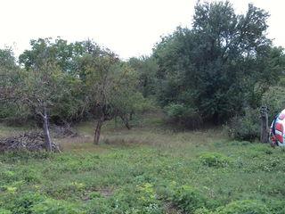Срочно - кирпичный дом , рядом с санаторием Кодру + земля или меняю на малосемейку в Кишиневе .