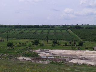 Срочно продам 11-гектаров сада .9.000е