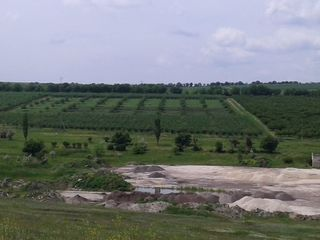 Срочно продам 12-гектаров сада .11.000е За 1гиктар