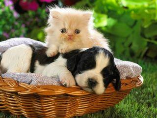 Передержка собак и кошек -не дорого- Ботаника Р.-Н