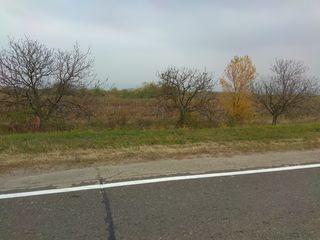 31 ari.Teren agricol.La traseu.15 km de la Chișinău.