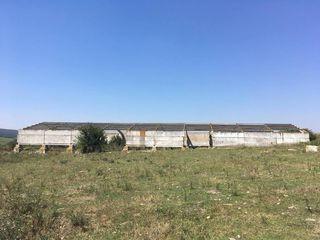 Hala agricola+1ar pentru construcii!