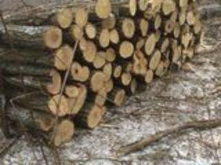 lemne de  foc drova  transport gratis la domiciliu