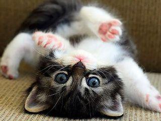 Передержка для вашего питомца! (Кошек, мелких грызунов и птиц!)