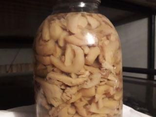 Продаются маринованные грибы вешенка выращенные на экологически чистом субстрате без химии