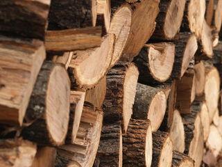 Lemne tari дрова