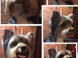 Стрижки собак,кошек,тримминг собак